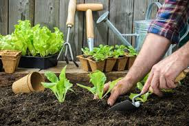 start your own vegetable garden central highlands water