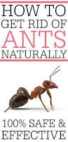 the 25 best get rid of ants ideas on pinterest killing house