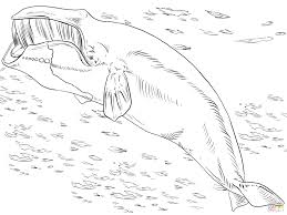 articles big blue whale coloring tag whale coloring