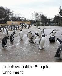 Penguin Birthday Meme - unbelieva bubble penguin enrichment penguin meme on me me