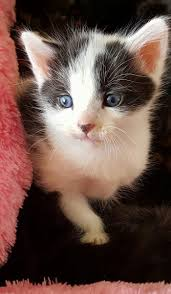 how could anyone do this beautiful kittens dumped inside laundry