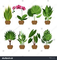 vector collection indoor house plants pots stock vector 597723467