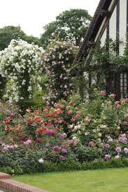 roses grow on you hortensis