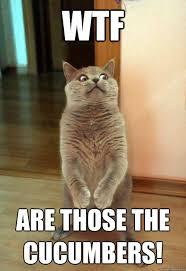 Wtf Is A Meme - wtf are those cat meme cat planet cat planet