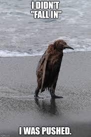 Meme Penguin - wet penguin imgflip