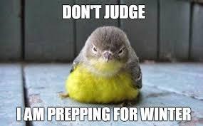 Meme Bird - 20 adorable bird memes that ll tickle your heart sayingimages com