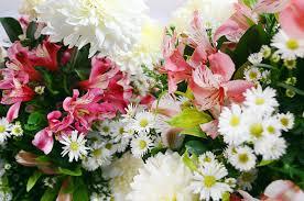 free images blossom petal decoration natural flora