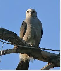 Bird of the month oklahoma city audubon society
