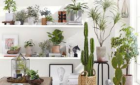 picture hanging ideas 5 indoor hanging planter ideas pottery barn