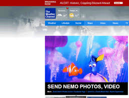 finding nemo disney gif u0026 share giphy