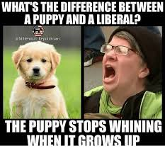 Liberal Meme - what s the difference between a puppy and a liberal republicans