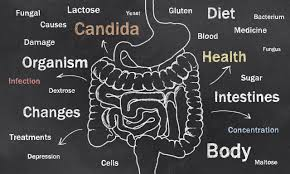 watchfit a candida diet plan to solve all of your candida symptoms