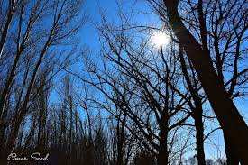 black trees trees tree captures nature naturelovers sun blue sky