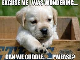 Cuddle Meme - cutest cuddle memes