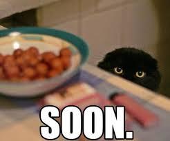 Soon Cat Meme - animal meme gallery