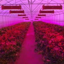 red and blue led grow lights uv plant light feifeier grow red blue white lights for garden