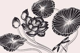 lotus flowers u0026 leaves drawings illustrations creative market