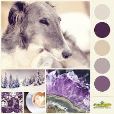 Pantone Color Scheme 13 Best Pet Color Palettes And Style Inspiration Images On