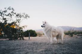 glamping in the mojave desert u2013 emwng