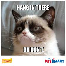Make Your Own Cat Meme - create a grumpy greeting plus you could win a trip to meet grumpy