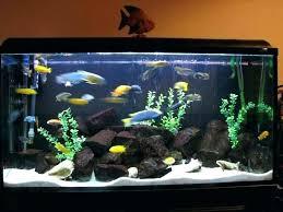 aquarium decorations aquarium for home decoration aquarium decoration idea ideas for