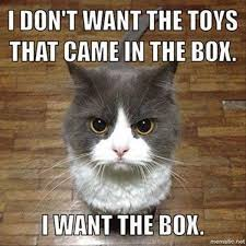 No Meme Cat - funny cat memes best cute kitten meme and pictures