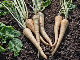 growing 10 root vegetables successfully
