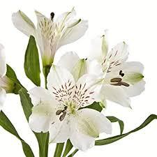 peruvian lilies eflowy 160 white alstroemerias peruvian lilies