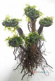 Bonsai Aquascape Pohon Bonsai Moss Untuk Aquascape Tipe Beringin Tokoscaper