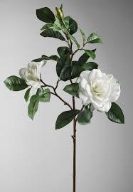 Gardenia Flower Gardenias White
