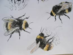 bumblebee drawing images reverse search