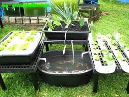 amazing backyard aquaponics backyard aquaponics gallery xtend