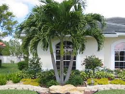 Front Yard Tree Landscaping Ideas Palm Tree Landscaping Design Home Ideas Pictures Homecolors