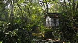 photography nature forest landscape trees house alone rocks