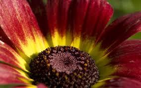 Dark Red Flower - dark red flowers 320x480 iphone 800x600 1024x768 1280x800