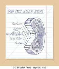 vector clipart of wood cross section scheme sketch wood cross