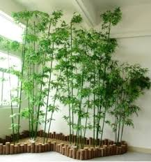 Wholesale Indoor Chinese Bamboo Plant For Home Decoration Plastic - Home decoration plants