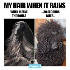 Rainy Day Meme - rainy day hair just for fun pinterest humor