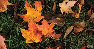 leaves change color dnr releases