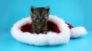 Cats In Small Spaces Video - cute santa kitten looking around and up to the snowfall winter