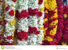 white yellow garland in the thailand market for sale royalty