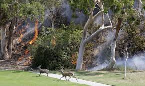 Wildfire Golf Club Canada by Devastating Photos Show The Wrath Of Largest Wildfire In Los