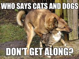 Give Me A Hug Meme - awww look the puppy is giving the kitty a hug by chandley meme