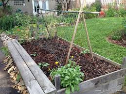 Growing Pumpkins On A Trellis Choose The Right Trellis For Your Climbing Vegetables Tenth Acre