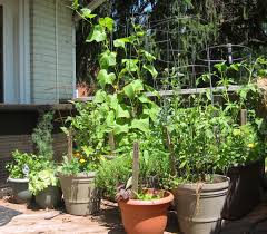 reasons container gardening is a great way to grow organic food