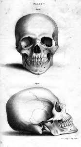 Halloween Skull Drawings Skull Illustration Halloween Pinterest Skull Illustration