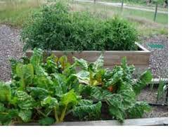 the colorado master gardener program in arapahoe county