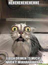 Mad Cat Memes - hehehehehehehhe u been drinkin to much i haven t muahahahahhah
