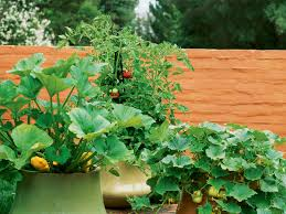 What Type Of Soil To Use For Vegetable Garden How To Grow Vegetables In Pots Sunset Magazine Sunset Magazine