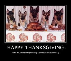 happy thanksgiving to all german shepherd dogs